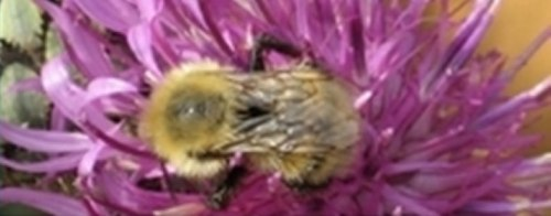 Imagen guia biodiversidad Valbona y Gúdar Javalambre.